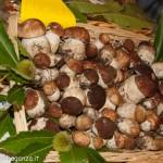 Fiera del Fungo Albareto 07-09-2012 (122) porcini