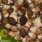 Fiera del Fungo Albareto 07-09-2012 (123) porcini