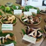 Fiera del Fungo Albareto 08-09-2012 (287) mostra micologica
