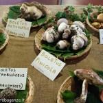 Fiera del Fungo Albareto 08-09-2012 (288) mostra micologica