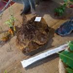 Fiera del Fungo Albareto 08-09-2012 (295) mostra micologica