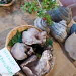 Fiera del Fungo Albareto 08-09-2012 (297) mostra micologica