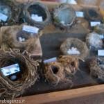 Fiera del Fungo Albareto 08-09-2012 (299) mostra micologica