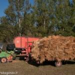 Fiera del Fungo Albareto 09-09-2012 (303)