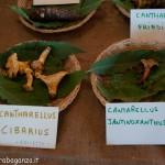 Fiera del Fungo Albareto 09-09-2012 (312) mostra micologica
