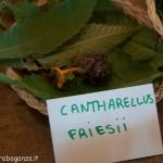 Fiera del Fungo Albareto 09-09-2012 (313) mostra micologica