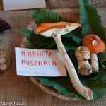 Fiera del Fungo Albareto 09-09-2012 (314) mostra micologica