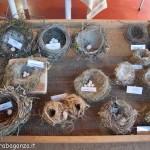 Fiera del Fungo Albareto 09-09-2012 (315) mostra micologica