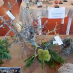 Fiera del Fungo Albareto 09-09-2012 (316) mostra micologica