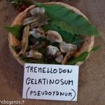 Fiera del Fungo Albareto 09-09-2012 (318) mostra micologica