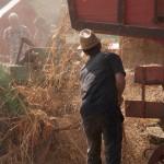 Fiera del Fungo Albareto 09-09-2012 (374) Antica trebbiatura