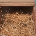 Fiera del Fungo Albareto 09-09-2012 (387) Antica trebbiatura