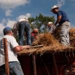 Fiera del Fungo Albareto 09-09-2012 (400) Antica trebbiatura