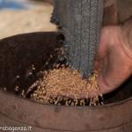 Fiera del Fungo Albareto 09-09-2012 (424) Antica trebbiatura