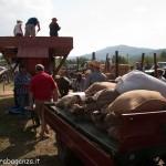 Fiera del Fungo Albareto 09-09-2012 (447) Antica trebbiatura