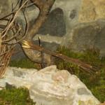 Presepe Natale 2012 se fosse Nato a Montegroppo (30) fontana abbeveratoio (a funtànna)