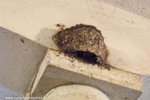 interno stalla - nido rondine