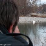 Albareto Cigno Bianco Reale Val Taro 09-02-2013 (206)