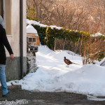 Albareto Fagiano Val Gotra Taro 14-02-2013 (10)