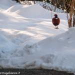 Albareto Fagiano Val Gotra Taro 14-02-2013 (12)