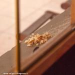 z finestra 01-02-2012 (10) davanzale