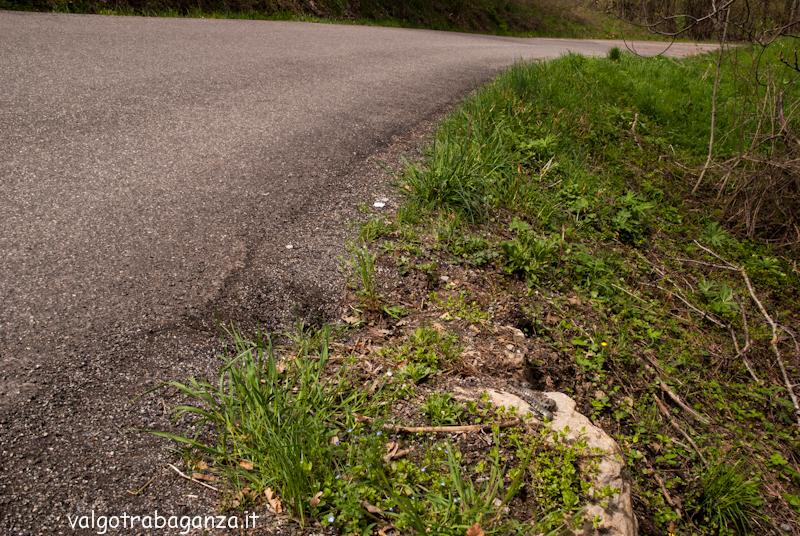 Biscia dal collare Albareto Val Gotra-Taro 2013 (180)