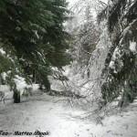 Monte Gottero neve 22-01-2013 (11) vetroghiaccio