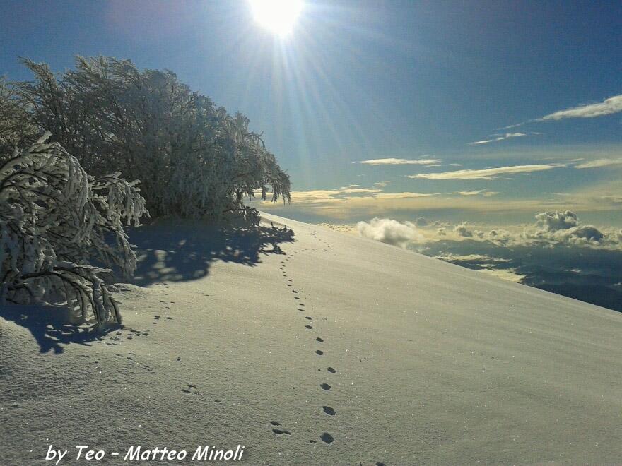 Monte Gottero neve 22-01-2013 (15) tracce lupo