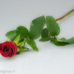 Biglietti auguri fiori rosa (11)