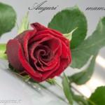 Biglietti auguri fiori rosa (29) mamma