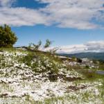 Cappelletta Passo neve primavera 24 –05-2013 (109)