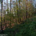 Val Baganza primavera (140)