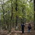 Monte Gottero (139) foresta  02-06-2013