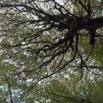Monte Gottero (165) foresta  02-06-2013