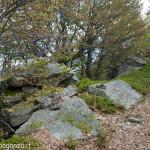 Monte Gottero (187) foresta  02-06-2013