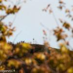 Monte Gottero (259) 02-06-2013