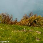 Monte Gottero (289) 02-06-2013