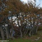 Monte Gottero (339) 02-06-2013