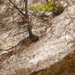 Monte Gottero (364) neve 02-06-2013