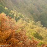 Monte Gottero (384) 02-06-2013