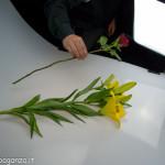 Still Life fiori (128) preparazione