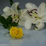 Still Life fiori (129)