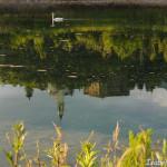 cigno Compiano Val Taro - Isabella Squeri 30-06-2013