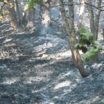 incendio boschivo 25-08-2012 Prelerna (Solignano PR) (29)