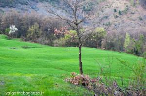 Cervo Parma Val Taro primavera 2013 (58)