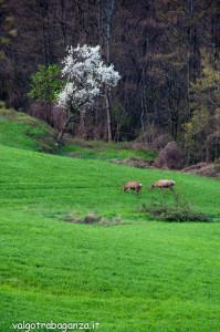 Cervo Parma Val Taro primavera 2013 (74)
