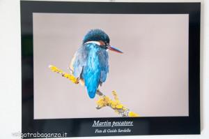 Mostra Fotogafia Guido Sardella (110) Martin pescatore