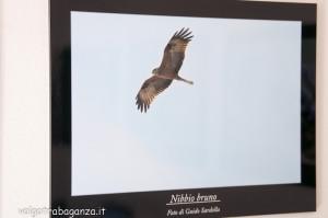 Mostra Fotogafia Guido Sardella (111) Nebbio bruno