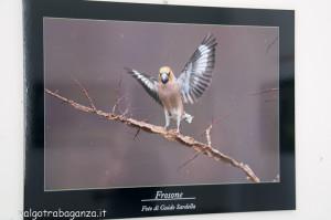 Mostra Fotogafia Guido Sardella (113) Frosone