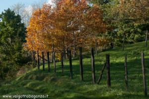 2012-11-05 Borgotaro Parma autunno ValTaro (16)
